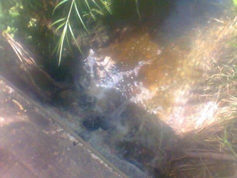 Limbah Dari Pabrik Tahu Milik H.Wondho Desa Kasang Pudak Kabupaten Muaro Jambi yang menimbulkan bau menyengat bak bangkai di sekitar kawasan jembatan Kasang Puda